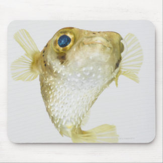 Spot-fin porcupinefish (Diodon hystrix) Mouse Mat