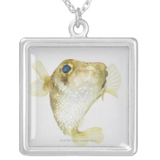 Spot-fin porcupinefish (Diodon hystrix) Silver Plated Necklace