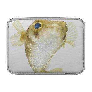 Spot-fin porcupinefish (Diodon hystrix) Sleeve For MacBook Air