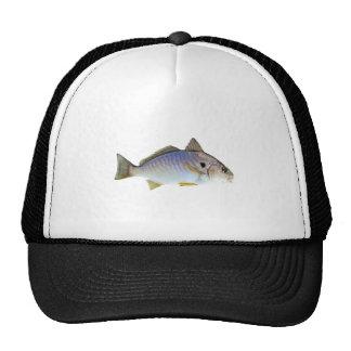Spot Fish Photo Trucker Hats