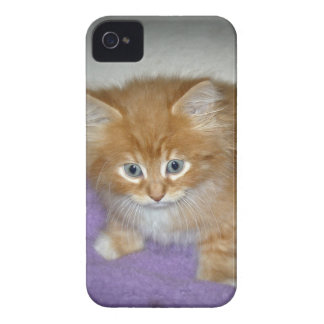 Spot on this kitten iPhone 4 covers