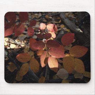 Spotlight Leaves Mouse Pad