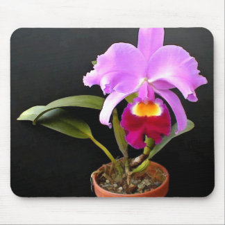 Spotlight on Purple Potted Orchid Mouse Pad