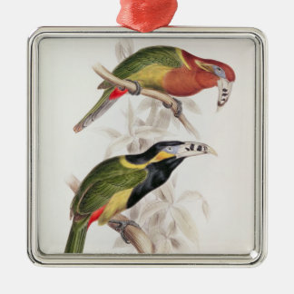 Spotted Bill Aracari, 19th century Christmas Ornament