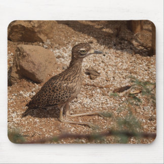 Spotted Bush Thick-Knee Mousepad