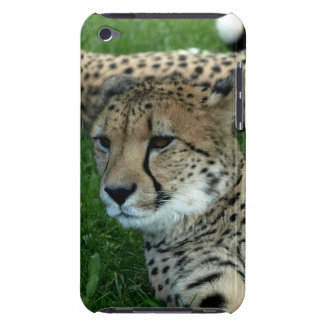 Spotted Cheetah iTouch Case