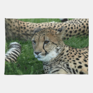 Spotted Cheetah Kitchen Towel