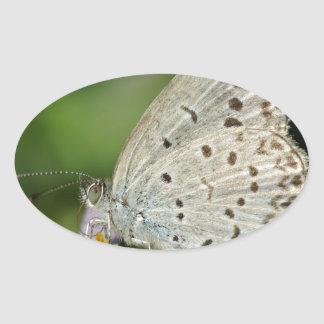 Spotted Cream Coloured Butterfly Oval Sticker