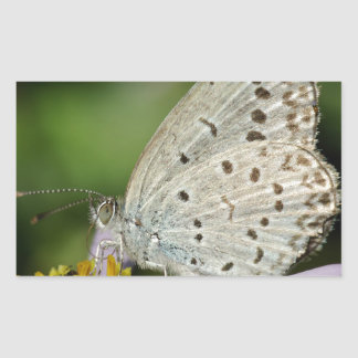 Spotted Cream Coloured Butterfly Rectangular Sticker