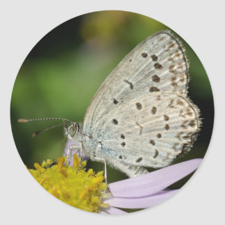 Spotted Cream Coloured Butterfly Round Stickers