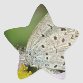 Spotted Cream Coloured Butterfly Star Sticker