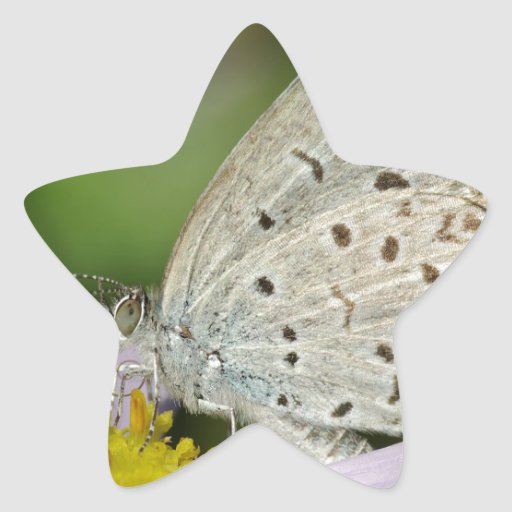 Spotted Cream Coloured Butterfly Stickers