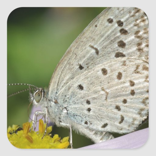 Spotted Cream Coloured Butterfly Square Stickers