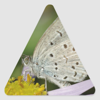 Spotted Cream Coloured Butterfly Triangle Sticker