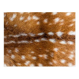 Spotted deer fur texture postcard