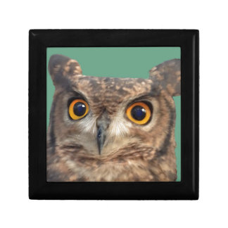 Spotted eagle-owl gift box