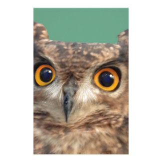 Spotted eagle-owl stationery