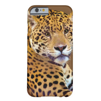 Spotted Jaguar Big Cat-lover #Gift Barely There iPhone 6 Case