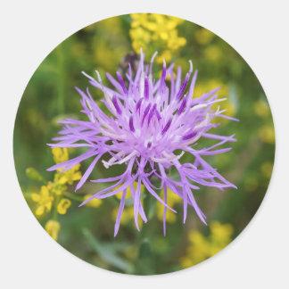 Spotted Knapweed Purple Wildflower Round Stickers