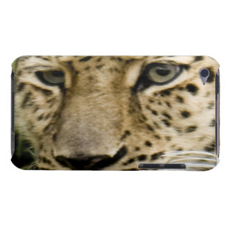 Spotted Leopard iTouch Case Barely There iPod Covers