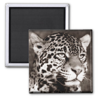 Spotted Leopard Square Magnet