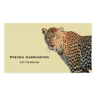 Spotted Leopard Wild Cat Photograph Pack Of Standard Business Cards