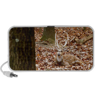 Spotted Male Buck Deer With Antlers in Fall Forest Mini Speaker