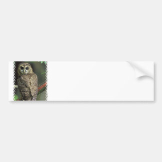 Spotted Owl Bumper Sticker