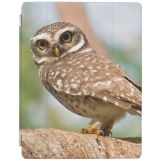 Spotted owl on morning flight. iPad cover