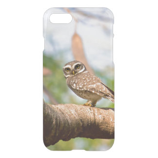 Spotted owl on morning flight. iPhone 8/7 case