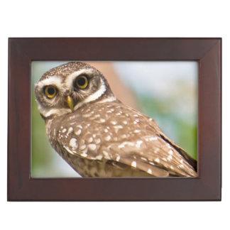 Spotted owl on morning flight. keepsake box