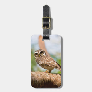 Spotted owl on morning flight. luggage tag
