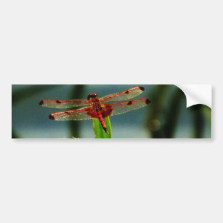 Spotted  Red and Black Dragonfly Bumper Sticker