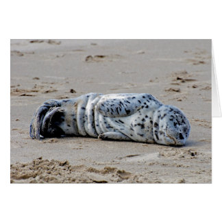 Spotted Sea Lion Pup Note Card