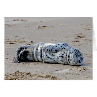 Spotted Sea Lion Pup Greeting Card
