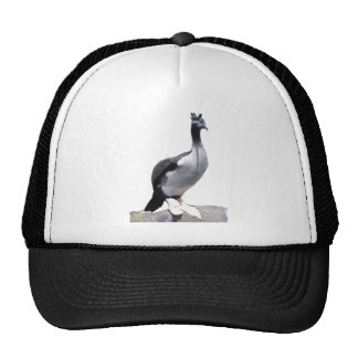 Spotted Shag Hat