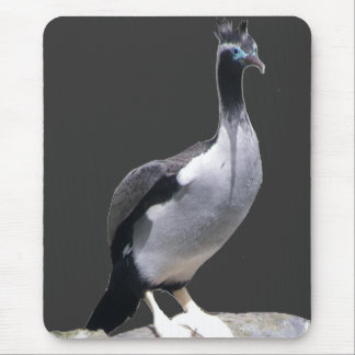 Spotted Shag Mouse Pads