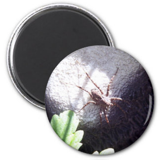 Spotted Spider 6 Cm Round Magnet