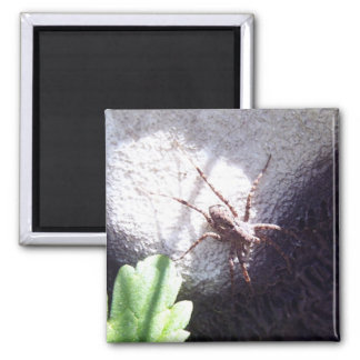 Spotted Spider Square Magnet