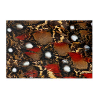 Spotted Tragopan Feather Abstract Acrylic Print