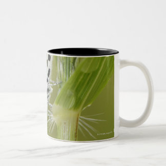 Spotted white butterfly resting on grass stem, Two-Tone coffee mug