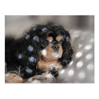 Spotty Cav? Postcard