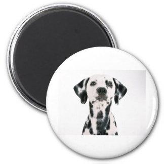 SPOTTY DOG DALMATION 6 CM ROUND MAGNET