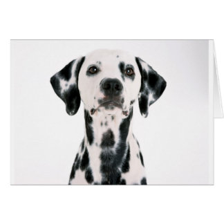 SPOTTY DOG DALMATION CARD
