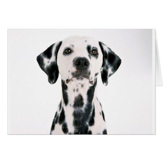 SPOTTY DOG DALMATION CARD