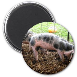 Spotty Piggy 6 Cm Round Magnet