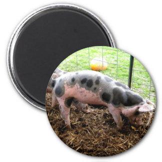 Spotty Piggy Magnet
