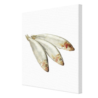 Sprats Canvas Print