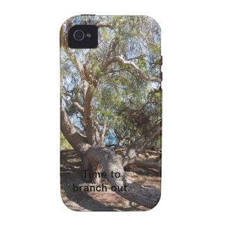 Sprawling Tree Near Santa Barbara on Coast iPhone 4 Case