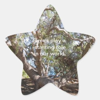 Sprawling Tree Near Santa Barbara on Coast Star Sticker